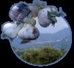 aglio-vessalico-logo